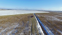 4K. Combine Harvester is working in the corn field after the First Snow! Aerial. Stock Footage