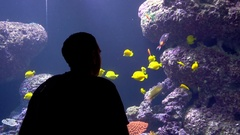 Man overwatching colorful tropical fish in aquarium Stock Footage