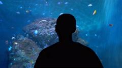 Man looking at colorful tropical fish in aquarium Stock Footage
