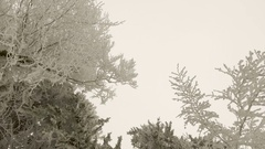 Winter forest in foggy weather Stock Footage