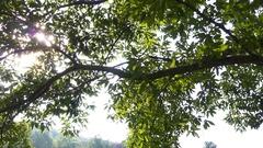 Sunlight Through Trees Stock Footage