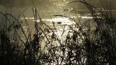 Pond Silhouetted at sunrise Stock Footage