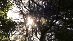 Sun shines through tree branches. Summer forest Stock Footage