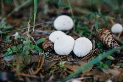 Fungus-slicker Stock Photos