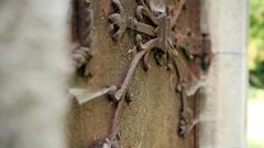 Old rusty iron mystery door Stock Footage