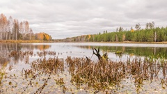 Rotten snag in the pond. Autumn, Russia. Time Lapse Stock Footage
