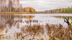 Rotten snag in the pond. Autumn, Russia. Panorama. Time Lapse Stock Footage