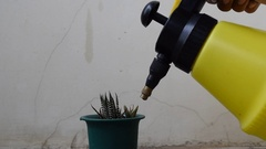 Hand holding spray watering cactus succulent plant Stock Footage
