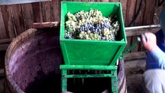 Vintner using manual vintage crusher on grapes, traditional artisanal wine Stock Footage