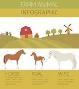 Horse farming infographic template. Stallion, mare, foal family. Flat design. Ve Stock Illustration