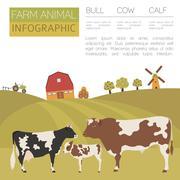 Cattle farming infographic template. Cow, bull, calf family. Flat design. Vector Stock Illustration