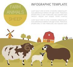 Sheep farming infographic template. Ram, ewe, lamb family. Flat design. Vector i Stock Illustration