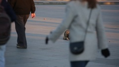 Homeless dog in the crowd of people Stock Footage