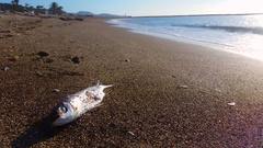 Dead fish on the beach Stock Footage
