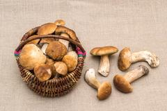 Group of porcini mushrooms on linen.  Mushroom in the basket. Stock Photos