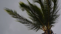 Palm tree on dark grey sky in the rude wind. Slow motion. Stock Footage