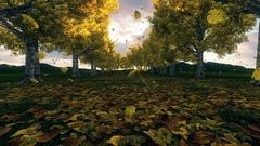 Autumn scene on a sunny day Stock Footage