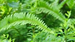 Fern leaf Stock Footage