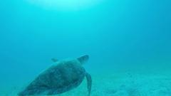 Man puts hand on Turtle underwater in virgin islands Arkistovideo