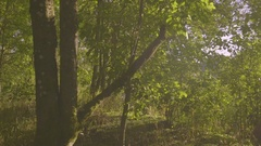 Young Woman Ducks To Avoid Tree Branch, Walks Along Hiking Trail On Sunny Day Stock Footage