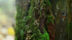 Microcosm on the rotten stump in damp forest. Stock Footage