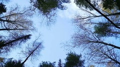 Awesome autumn forest. The tops of the trees bear against the blue sky. Stock Footage