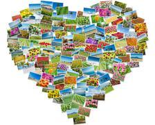 Various nature photos arranged in heart frame Stock Photos