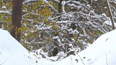 Santa Claus throws snow in slow motion. Smile in the forest. Stock Footage