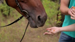 Young girl feeding a horse. Stock Footage