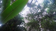 Tropical trees grow in greenhouse, Berlin botanical gardens, Germany Stock Footage