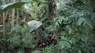Climate control system, lush tropical greenhouse, Berlin botanical gardens Stock Footage