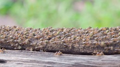 Termites are insects that eat wood in house Stock Footage