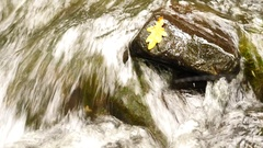 Rotten oak leaf on stone in blurred water of mountain river, autumn leaves. Stock Footage