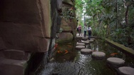 People walk on pond stepping stones with fish, Berlin botanical gardens Stock Footage