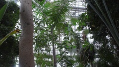 Lush tropical trees grow in greenhouse, Berlin botanical gardens, Germany Stock Footage
