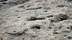 A lizard runs among the rocks when it starts to rain in the Botanical garden. Stock Footage