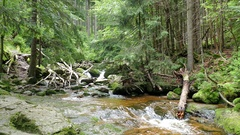 Stream of water in the wild forest. Karkonoski National Park, Poland Stock Footage