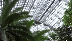 Huge greenhouse roof, botanical garden tropical lush plants, Berlin, Germany Stock Footage