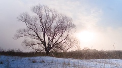 Romantic landscape of snow valley. Steady shot Stock Footage