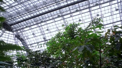 Huge botanical garden greenhouse roof, tropical plants, pan left Berlin Stock Footage