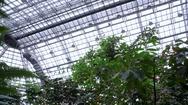 Huge botanical garden greenhouse roof, tropical plants, pan left Berlin Stock Footage