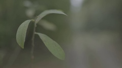 Green plant in the forest Stock Footage