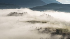 Foggy morning in autumn with sheep emerge from mist time lapse Stock Footage