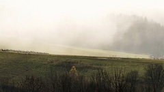 Sheep feeding pasture in autumn mist morning time lapse Stock Footage