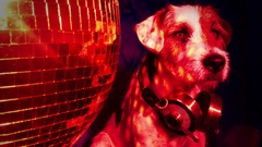 Dog disco puppy animal pet funny music doggy hifi stereo ghettoblaster Arkistovideo