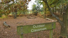 Outdoor Classroom in forest school countryside during Autumn in England Stock Footage