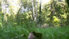 Young man walking in a wood (slow motion) Stock Footage