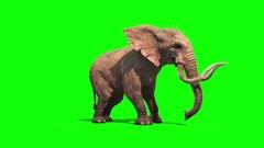 Elephant Dies Green Screen Stock Footage