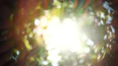 Beautiful Sun shine through tree green leaves Arkistovideo