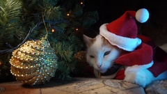 Funny cat dressed in a Christmas hat Stock Footage